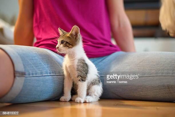 Tiny Kitten between woman's legs
