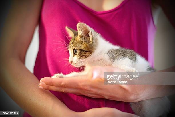 Tiny kitten in woman's hands