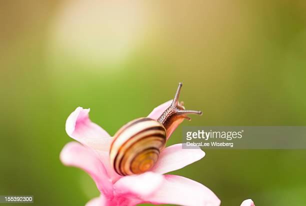 tiny lil fellow - garden snail stock photos and pictures