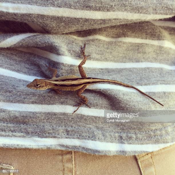 tiny lizard on a little boy - iguana family stock photos and pictures