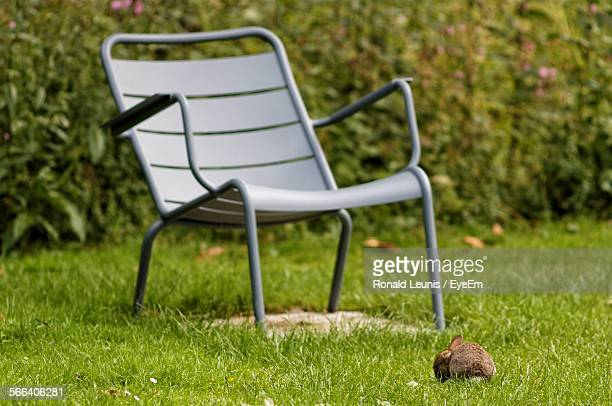 Tiny Rabbit In Front Of Empty Chair At Yard Against Plants