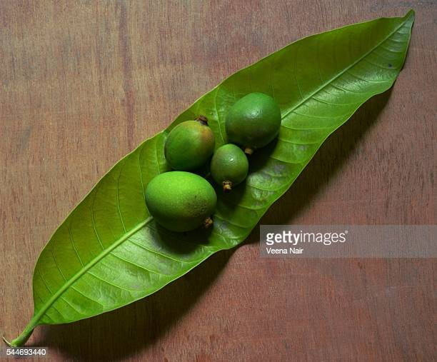 Tiny raw mangoes in a fresh green mango leaf on a wooden table