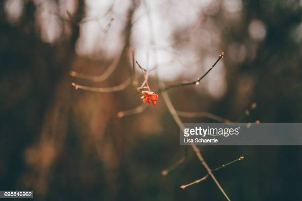 tiny red flower on bare branches in winter - ruhige szene stock pictures, royalty-free photos & images