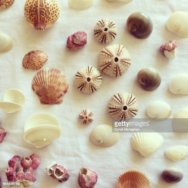 tiny seashells - barnacle stock pictures, royalty-free photos & images