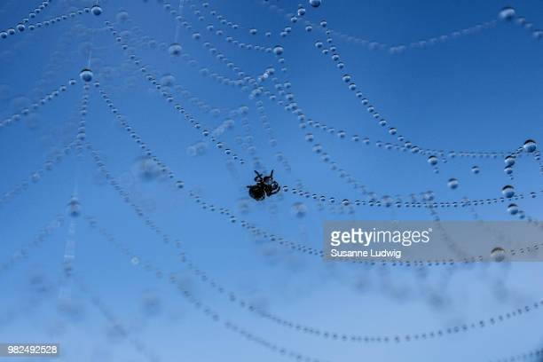 tiny spider in big blue sky