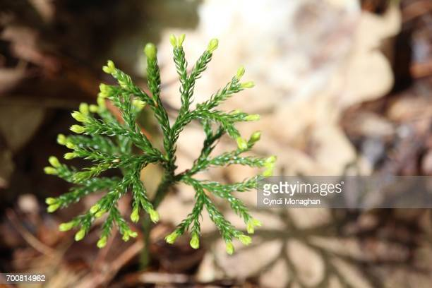 tiny tree in forest - sapling stock photos and pictures