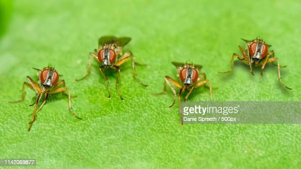 tiny wasp-like flies - african wasp stock pictures, royalty-free photos & images