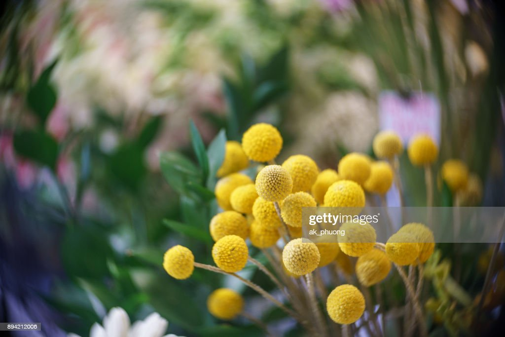 Tiny Yellow Ball Flowers Stock Photo Getty Images