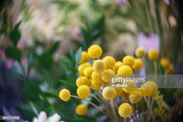 Tiny yellow ball flowers