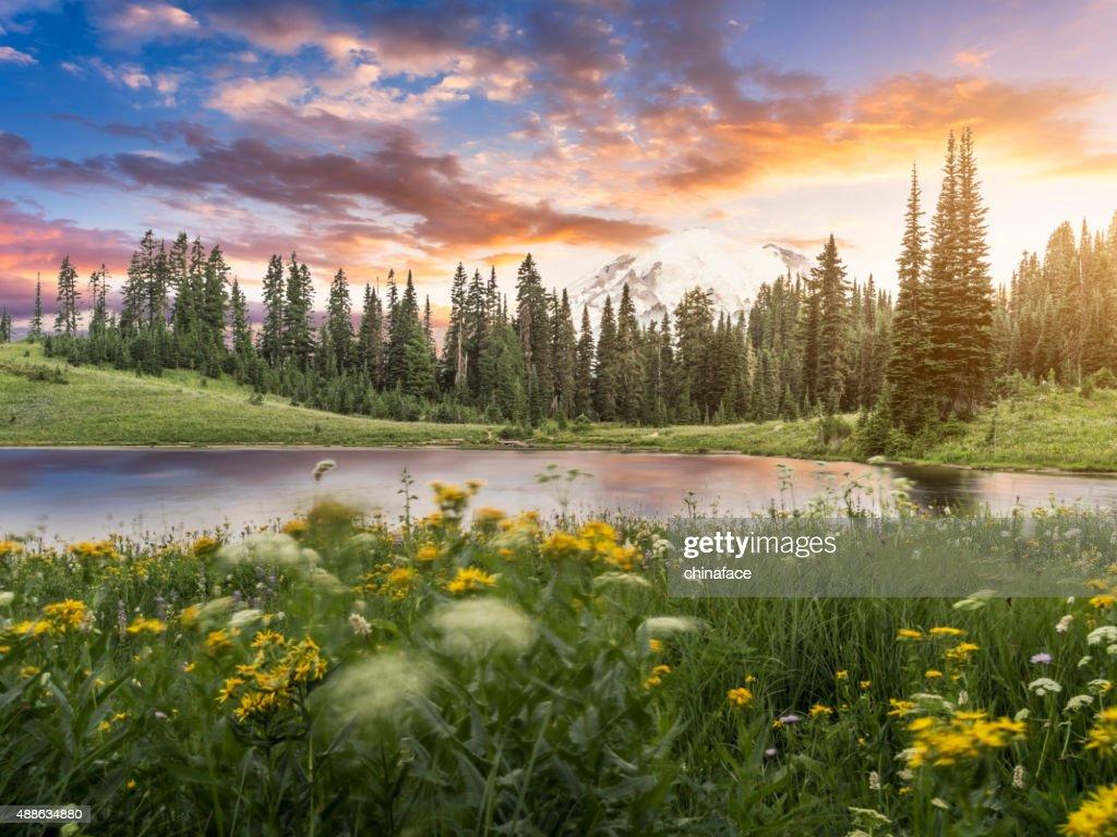 Tipsoo Lake of MT.Rainier : Stock Photo
