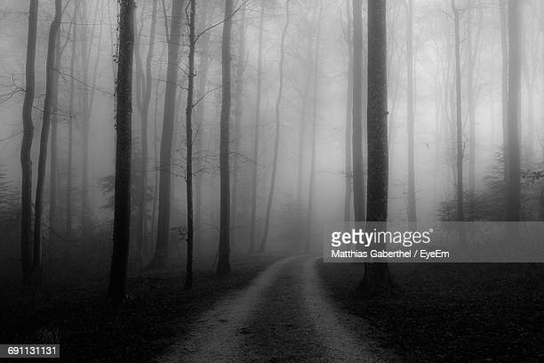 Tire Track Amidst Trees In Forest During Foggy Weather