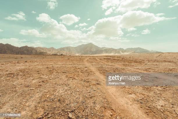 tire tracks through the arid desert - 荒野 ストックフォトと画像