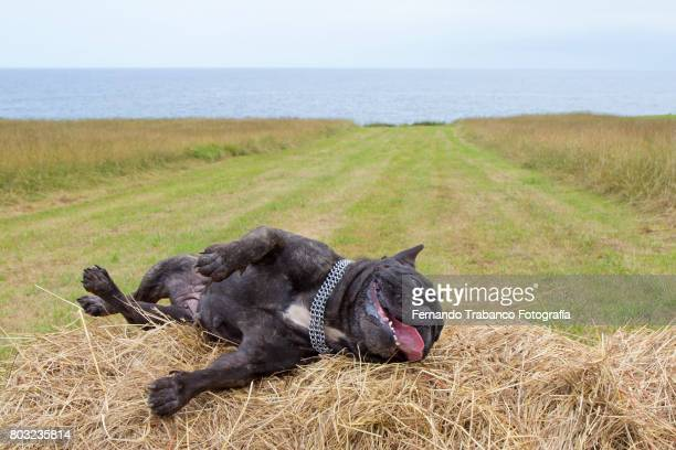 tired and exhausted dog - dead dog stock pictures, royalty-free photos & images