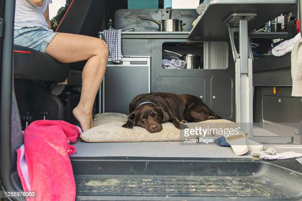 tired dog sleeping in the campervan - escaping stock pictures, royalty-free photos & images