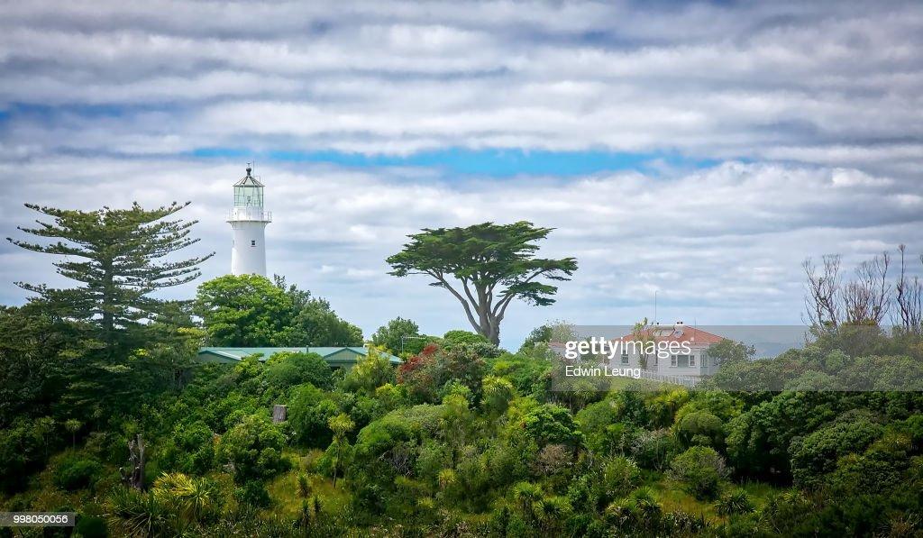 Tiritiri Matangi Island : Stock Photo