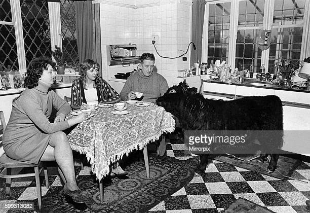 Titch joins Mrs Jean Haddock her daughter Vivien and his owner farm manager Mr Ken Beddoes at teatime As the family pet Titch knows how to behave...