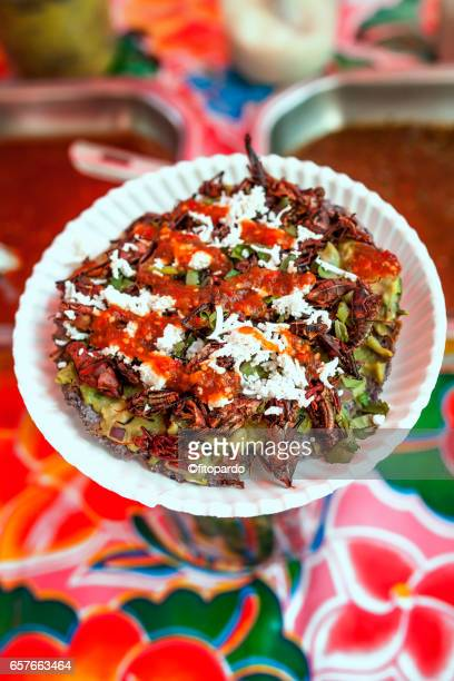 Tlayuda dish with Edible Mexican Chapulines (grasshoppers)