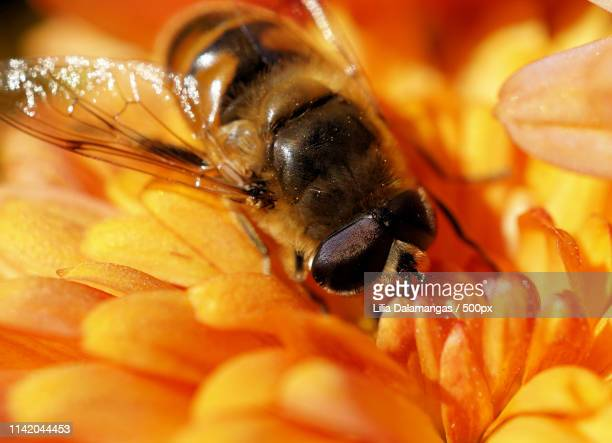 to bee or not to bee - {{asset.href}} stock pictures, royalty-free photos & images