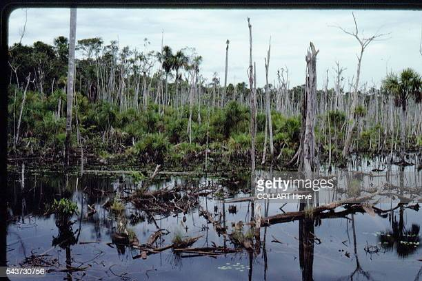 To build a road from Manaus to Boa Vista it was necessary to cut off rivers putrid swamps form where mosquitoes breed like crazy