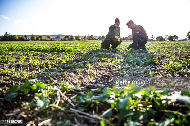 to calculate weeds, two farmers kneels in a rape field and measure with a folding ruler - agriculture stock pictures, royalty-free photos & images