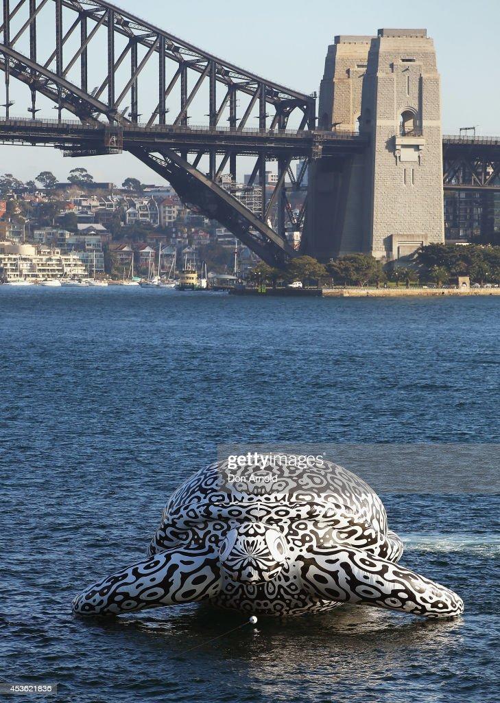 Gigantic Sea Turtle Sculpture Floats Past Sydney Harbour Bridge and Sydney Opera House : Foto jornalística