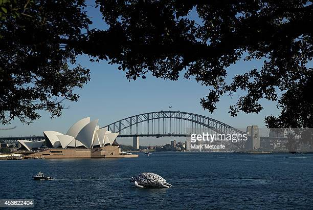 To celebrate the World's First Undersea Art Exhibition a 5 metre tall 15 metre long Sea Turtle cruises past Sydney Harbour at Mrs Macquarie's Chair...