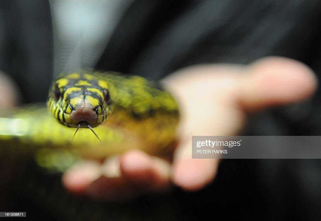 CHINA-LUNAR-ANIMAL-SNAKE : News Photo