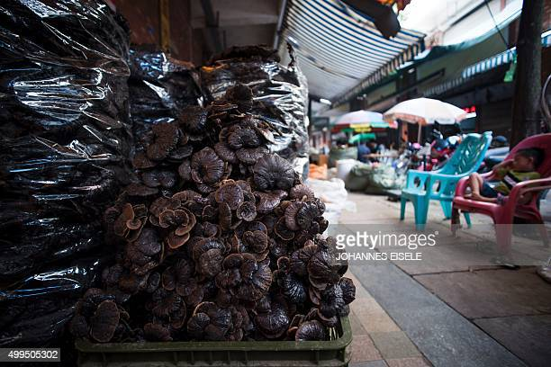 To go with ChinatraditionhealthawardNobelFOCUS by Rebecca Davis and Ludovic Ehret This picture taken on June 21 2015 shows mushrooms used in Chinese...