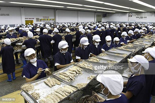To go with 'FinanceeconomyPhilippinesfoodfishtuna FEATURE' by Jason Gutierrez Workers pack fresh tuna at a factory in General Santos City fish port...