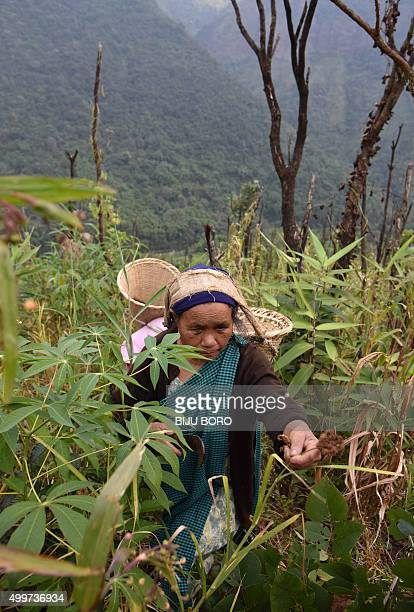 To go with 'IndiaFoodOrganicLifestyle' FEATURE by Etienne Fontaine In this photograph taken on November 6 an Indian Khasi tribal villager collects...