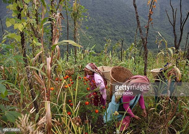 To go with 'IndiaFoodOrganicLifestyle' FEATURE by Etienne Fontaine In this photograph taken on November 6 Indian Khasi tribal villagers collect herbs...