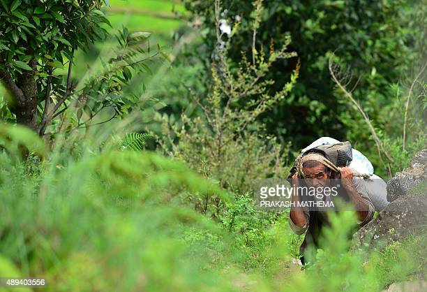 To go with ' NepalEarthquakePorters' by Ammu Kannampilly In this photograph taken on August 11 a Nepali porter carries relief goods material in the...