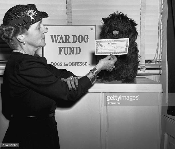 To publicize the War Dog Fund run by Dogs for Defense President Roosevelt's dog Fala is enlisted as a Private The certification is held by the...