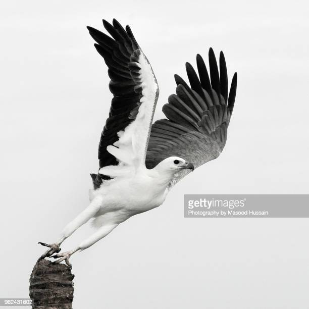 to soar is your destiny - taking off activity stock pictures, royalty-free photos & images