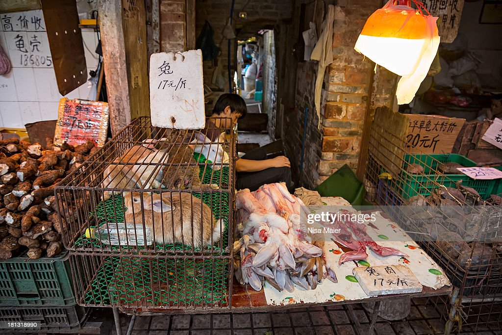 At a wet market in Guangzhou, China. : News Photo
