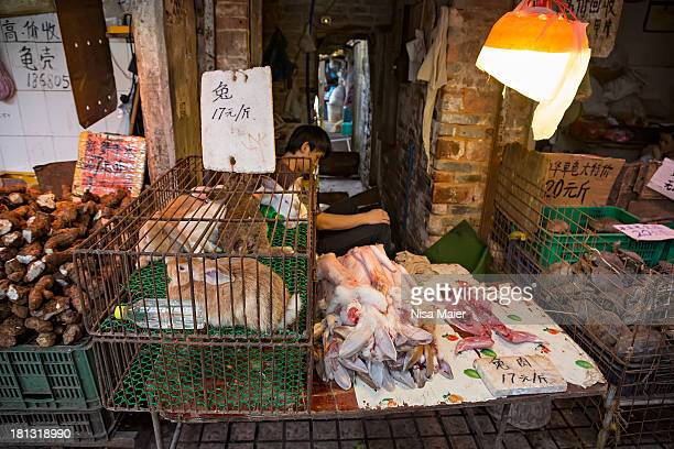 To the left are the still alive rabbits, in the middle are the skins from the already sold ones-skin for sale as well at that stage, and to the right...
