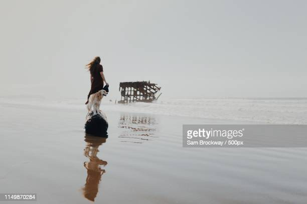 to the ocean - girl blows dog stock photos and pictures