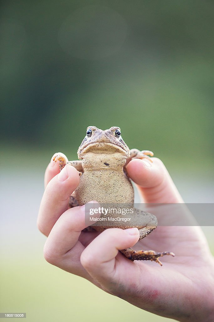 Toad belly : Stock Photo