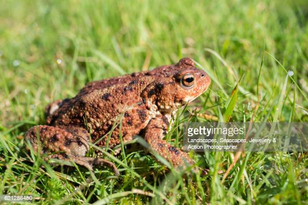 Toad in the Sun