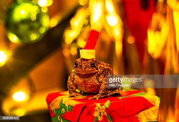 Toad Wearing a Santa Hat under a Tree