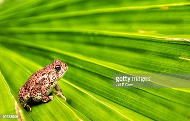 toad with palm - un animal fotografías e imágenes de stock