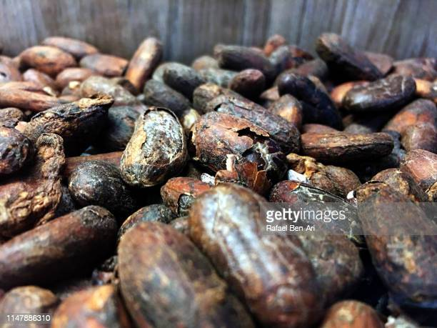 Toasted cacao beans