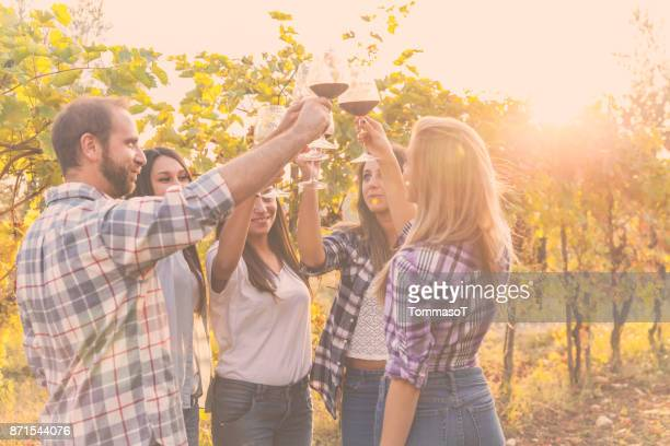 toasting at sunset in the vines - chianti region stock photos and pictures
