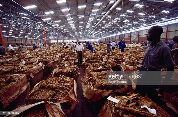 Tobacco Auction Floor