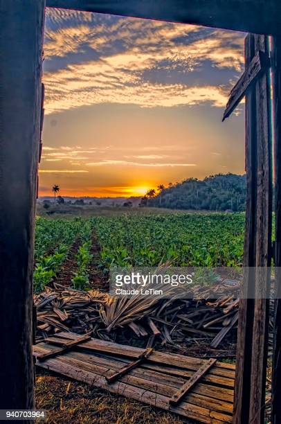 tobacco barn sunrise view - valle de vinales stock-fotos und bilder