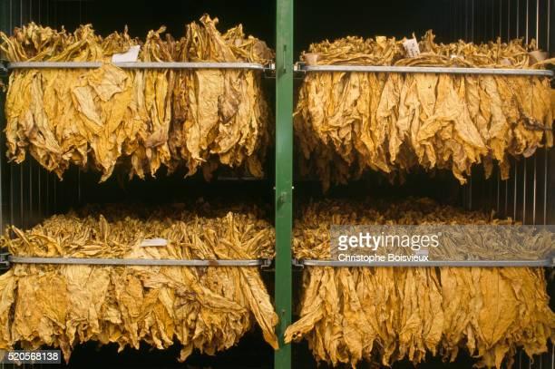 tobacco drying on rack - ベルジュラック ストックフォトと画像