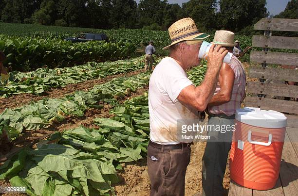 Tobacco farmer Lewis Brady takes a break from harvesting his tobacco crop August 22 2001 in Dunkirk MD The Brady family have been growing tobacco for...