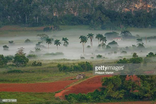 tobacco farms of vinales, pinar del rio - cuba - pinar del rio stock photos and pictures