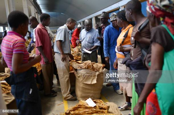 Tobacco growers prepare their tobacco for auction at the Boka Auction House Harare Zimbabwe April 17 2012 More than a decade after it began seizing...
