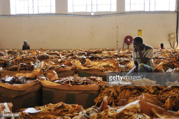 Tobacco growers wait for their tobacco barrels to be sold on the auction floor at the Boka Auction House Harare Zimbabwe April 17 2012 More than a...